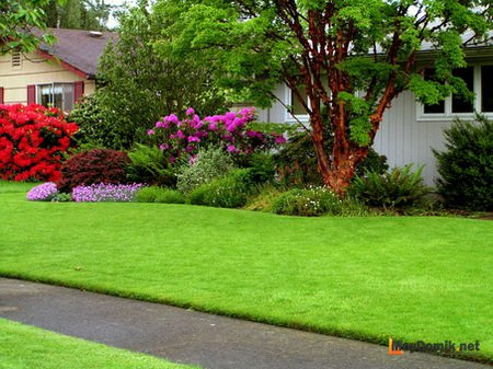 Газон на даче: как сделать зеленую лужайку своими руками 41