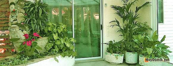 Оформление зимнего сада в квартире