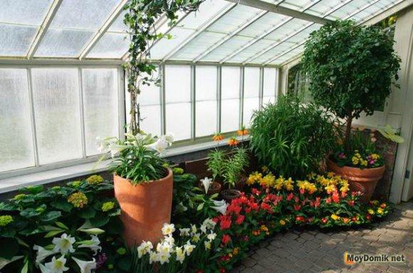 Оранжерея-зимний сад в квартире