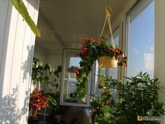 Пример зимнего сада на балконе