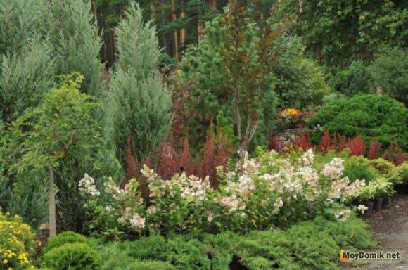 Хвойные растения и деревья в ландшафтном дизайне