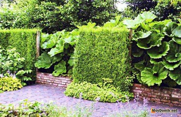 Как создать ландшафтный дизайн с хвойными растениями и деревьями