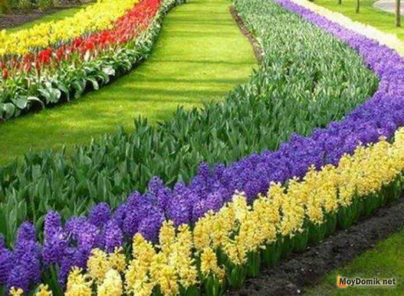 Выбираем растения и цветы для рабатки