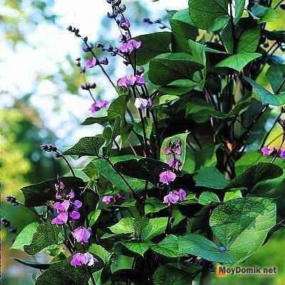 Главная  Сайт о растениях