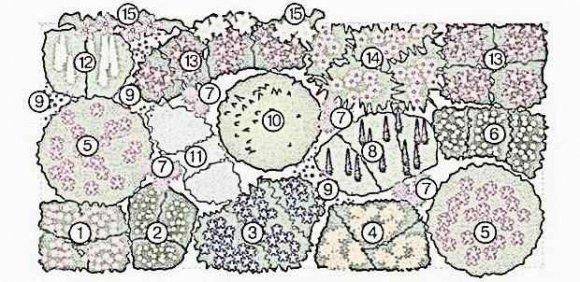 Миксбордер своими руками – готовые схемы из многолетников, хвойных и кустарников – план с фото