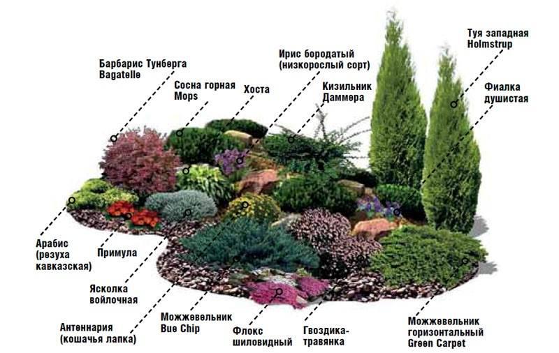 Альпийская горка растения схема