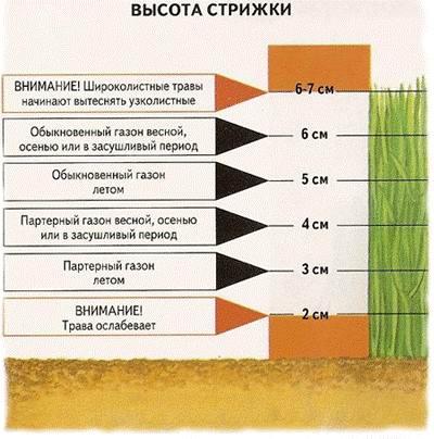 Правильная стрижка газона