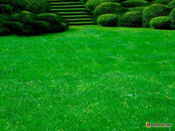 Элитный партерный газон