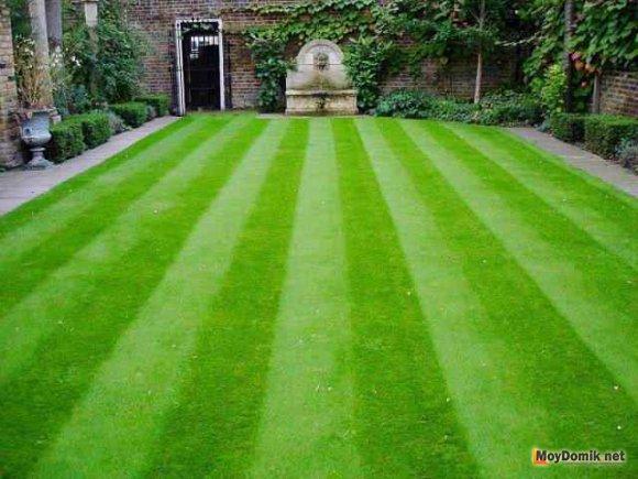 Партерный газон - декоративная стрижка