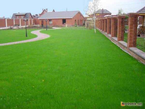 Партерный газон на даче