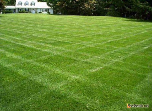Партерный газон - оригинальная стрижка
