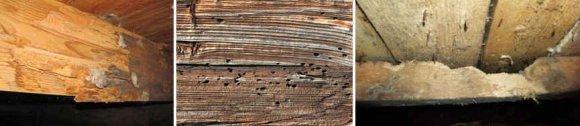 Червоточины на деревянных балках перекрытия