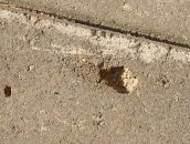 Дефекты на поверхности тротуарной плитки