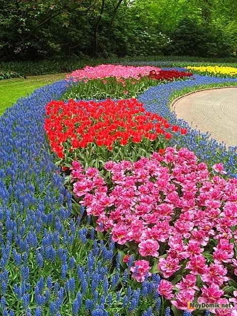 Ландшафтный дизайн с хвойными растениями фото
