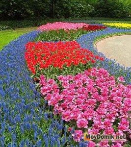 Рабатка - цветочная композиция