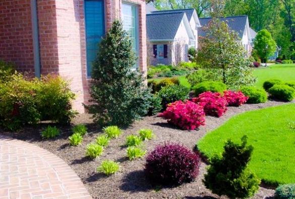 Газонная трава в ландшафтном дизайне дома