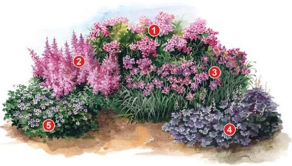 Схема из цветов с флоксами
