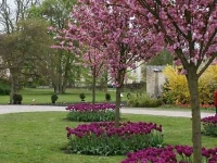 Ландшафтный дизайн зоны плодового сада