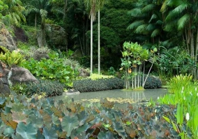 Ландшафтный дизайн садового участка от Роберто Бурле Маркса