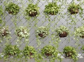 Озеленение подвесными горшками забора из рабицы