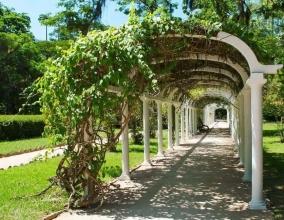 Пергола-туннель, оплетенная виноградом
