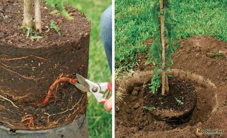 Как и когда правильно сажать плодовые деревья 245