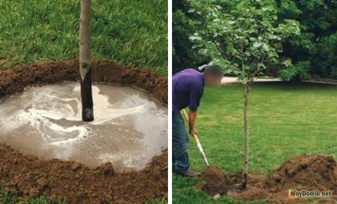 Когда лучше сажать деревья