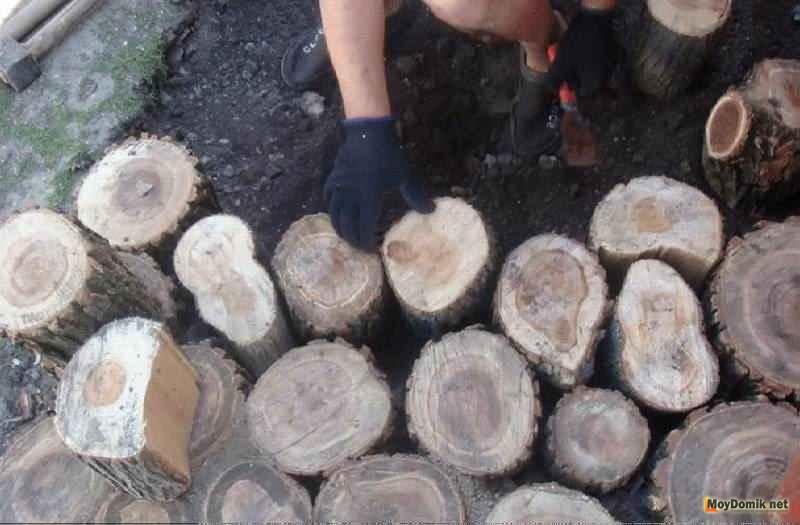 Дорожка из спилов дерева своими руками инструкция видео и 37
