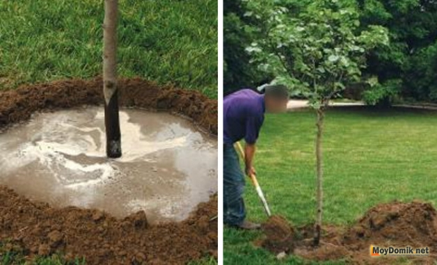 Посадка дерева - полить и засыпать грунтом