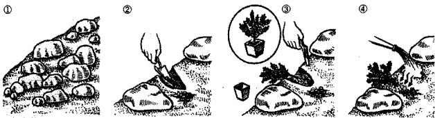 Посадка альпийской горки