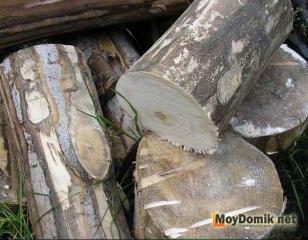 Очищенные от коры спилы дерева