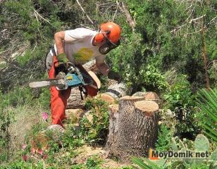 Нарезка спилов дерева