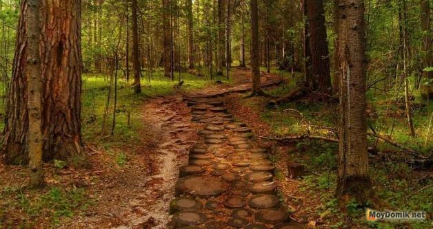 Дорожка из спилов дерева в лесу
