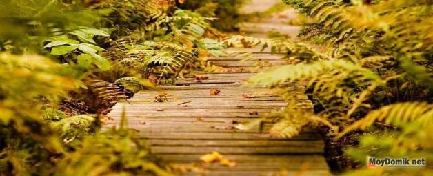 Садовые дорожки из дерева своими руками