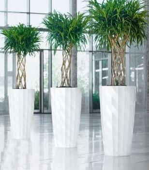 Декоративные растения в дизайне балкона